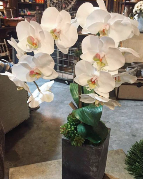 faux-orchid-the-find-reno