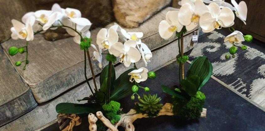 the-find-reno-faux-orchidIMG_3518